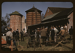 auction in a farm